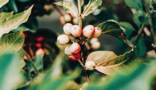 【豆知識】コーヒーの日はいつ?10月1日は国際コーヒーの日!